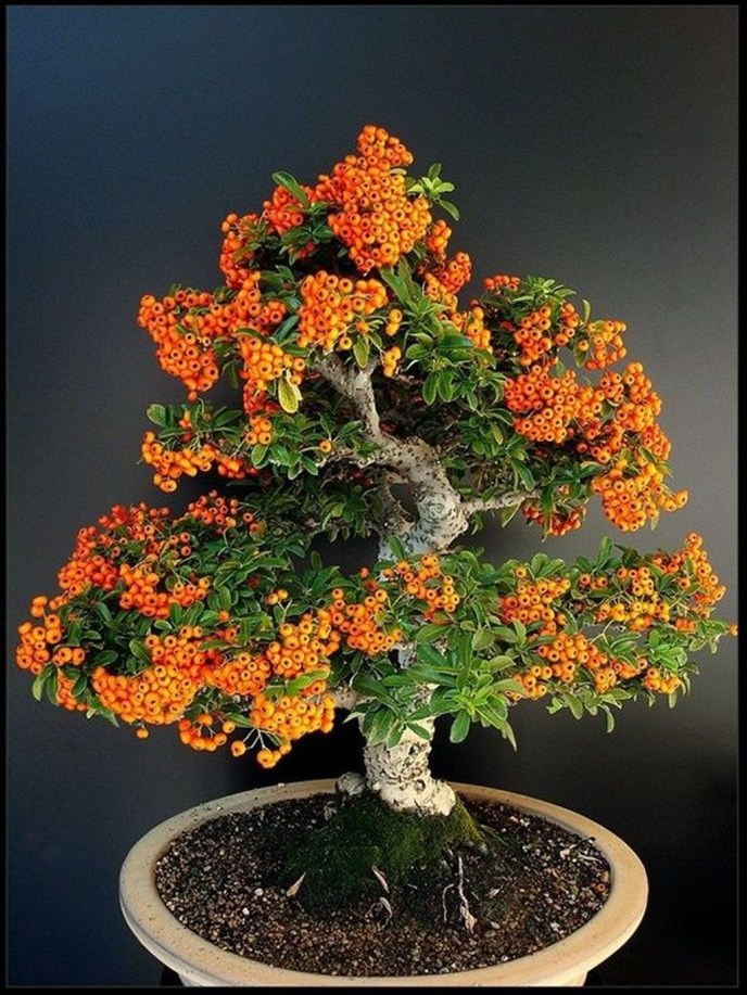 Creative Bonsai Trees Gardening Ideas For Backyard 46