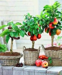 Creative Bonsai Trees Gardening Ideas For Backyard 51