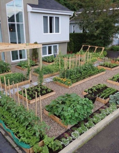 Best Ideas To Growing Vegetable Garden 34