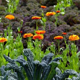 Fancy Garden Bed Borders Ideas For Vegetable And Flower 47