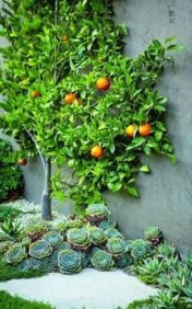 Awesome Succulent Garden Ideas In Your Backyard 02