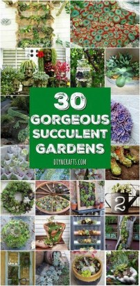 Awesome Succulent Garden Ideas In Your Backyard 06