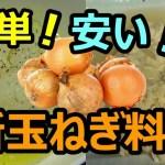 新玉ねぎ料理!!(玉ねぎバターと玉ねぎ卵とじ)簡単!安い!美味しい!