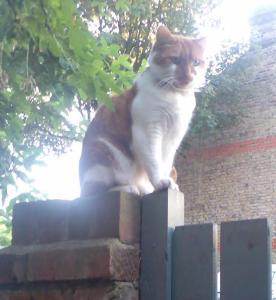 Honey, Pamela Majorcas's cat