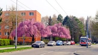 Brno-Spring-033