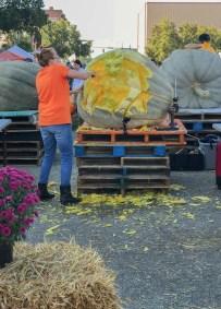 Operation Pumpkin | Hamilton Ohio