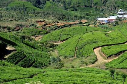 srilanka7