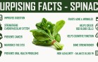 Interesting Facts – Spinach – Surprising Health Benefits of Eating Spinach