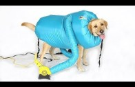 15 INSANE Pet Gadgets You Must Have For Safety