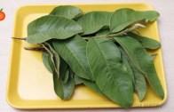 Unbelievable Trick For Diabetes Cure | Diabetic Leaves | Natural Treatment For Diabetes