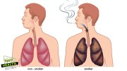 Top 10 Foods That Flush Nicotine Out of The Body – Health Tips