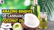 Amazing Benefits Of Cannabis Coconut Oil – Health Sutra – Best Health Tips