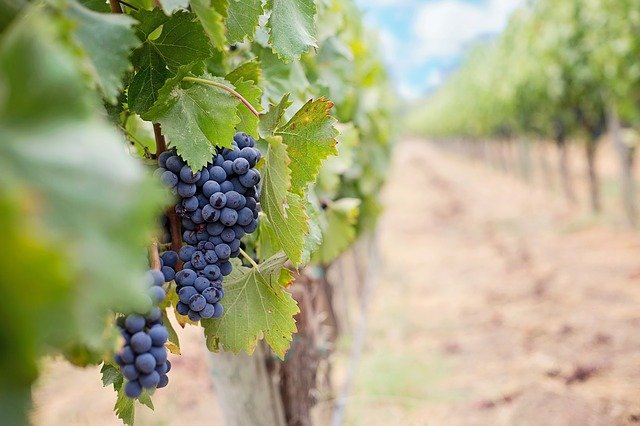 tips about wine can be found in the following article 1 - Tips About Wine Can Be Found In The Following Article