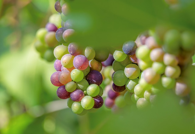 simple strategies for enjoying your wine more 1 - Simple Strategies For Enjoying Your Wine More