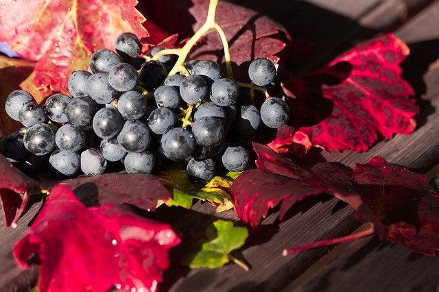help me to understand wine better please - Help Me To Understand Wine Better Please!
