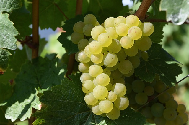 curious about wine check out these great tips - Curious About Wine? Check Out These Great Tips!