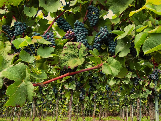 helpful tips that will help with wine 1 - Helpful Tips That Will Help With Wine