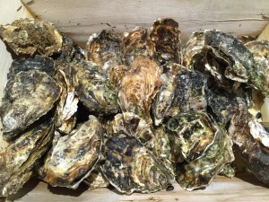 Oysters - CookingCoOp.com