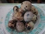 Quail eggs (itlog ng pugo)