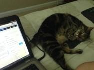 Kitty Snuggle