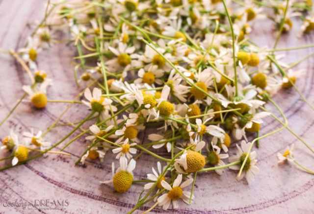 Grow and dry your own chamomile