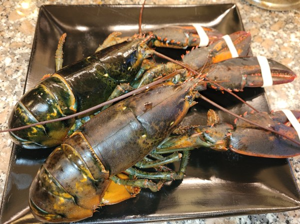 Lobsters ready for cooking