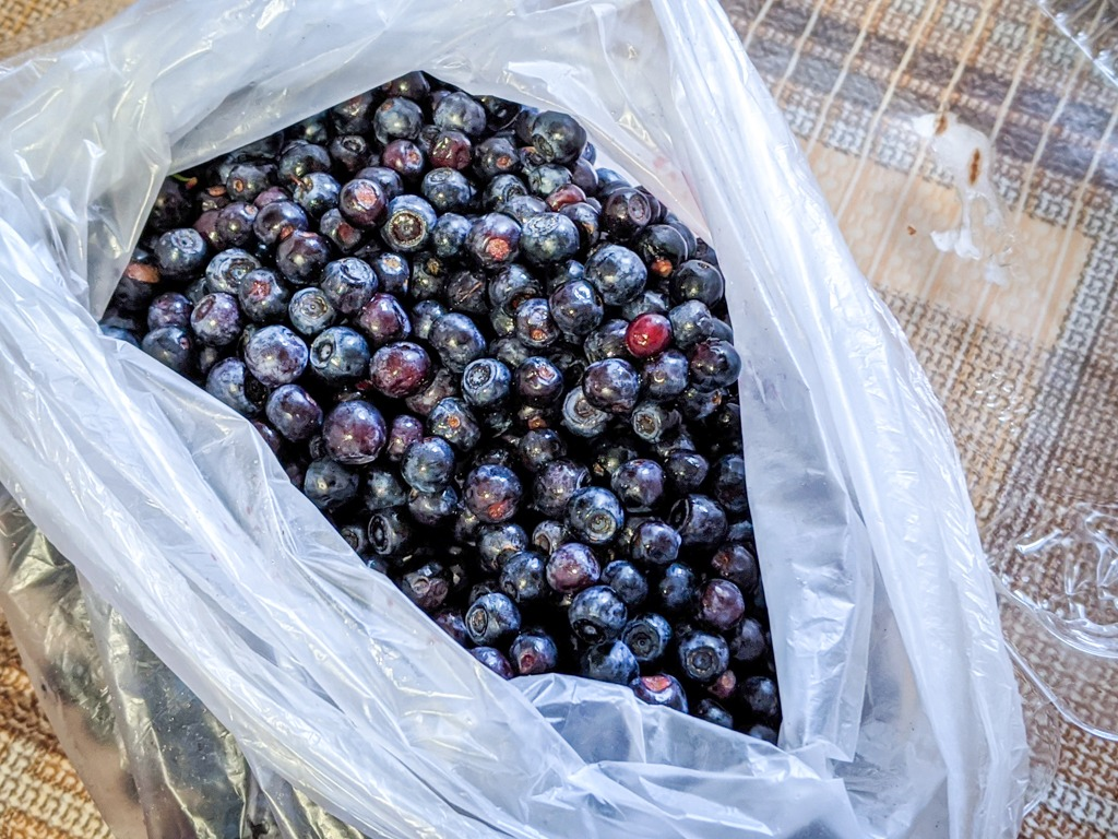 bag of forest blueberries