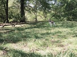 Bruno in Prospect Park
