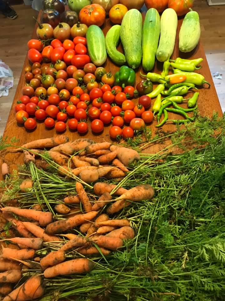 Vegetables set out on table