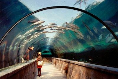 Aquarium | Cook Jenshel Photography