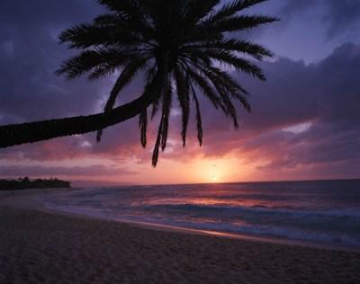 Hawaii – Oahu & Lanai (HI) | Cook Jenshel Photography