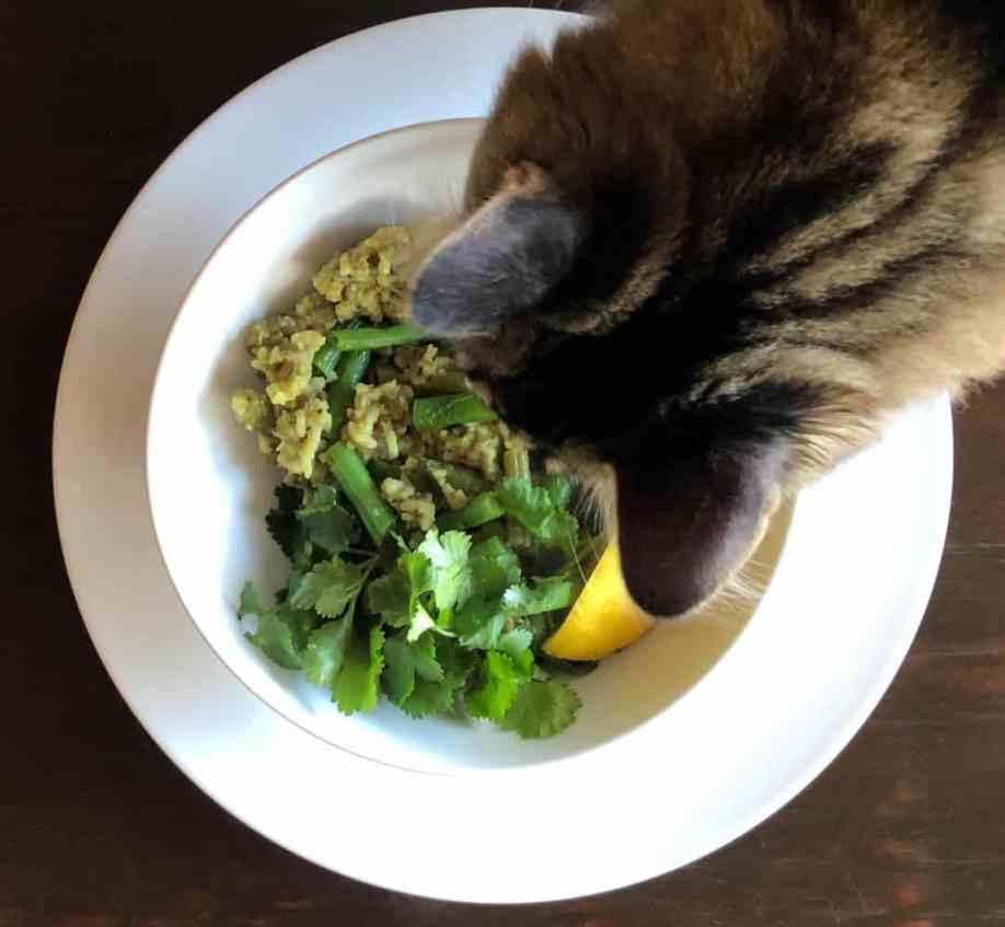 cat looking into kitchari bowl