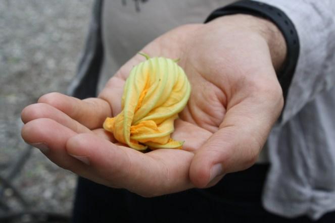 cupped squash blossom
