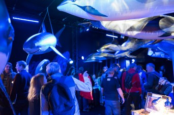 whalefest-96