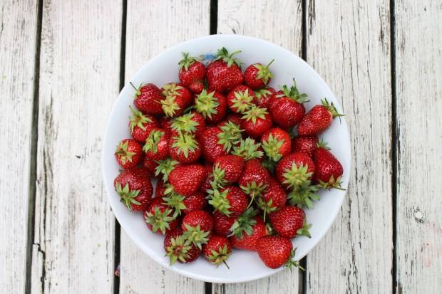 strawberries-986628_1920.jpg