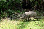 wild life Bako National Park