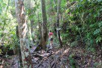 Bako National Park trails