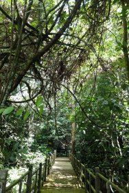 caves nature sarawak