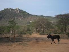 remote angola