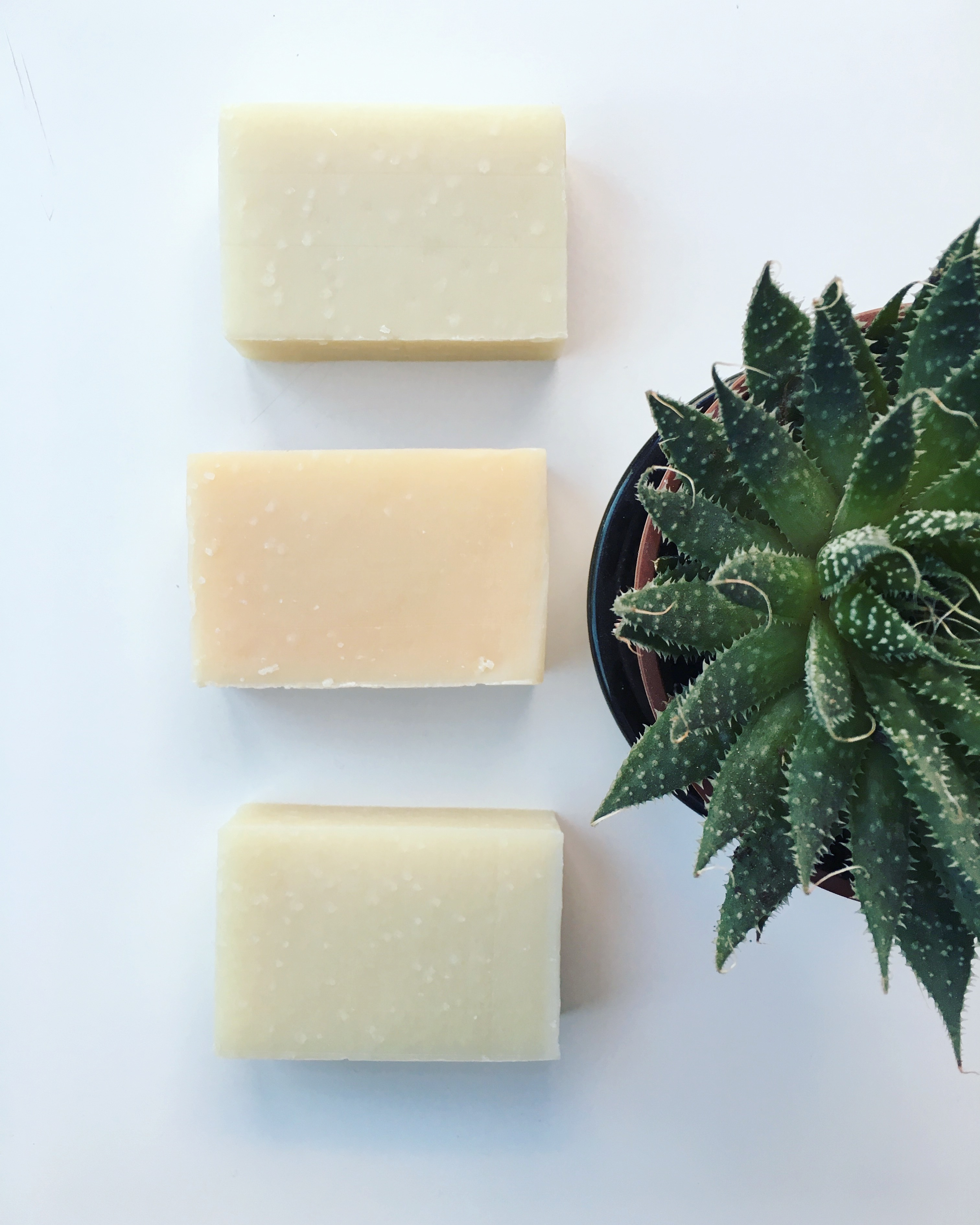 Shampoo Bars are here ⭐️ what you need to know