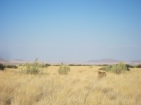 Cheetah safari africa wild