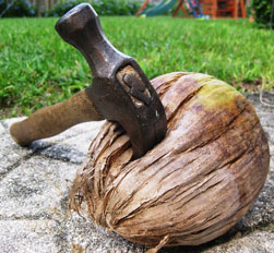 Step 1. Hammer in coconut