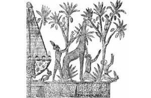 Egypt monkeys
