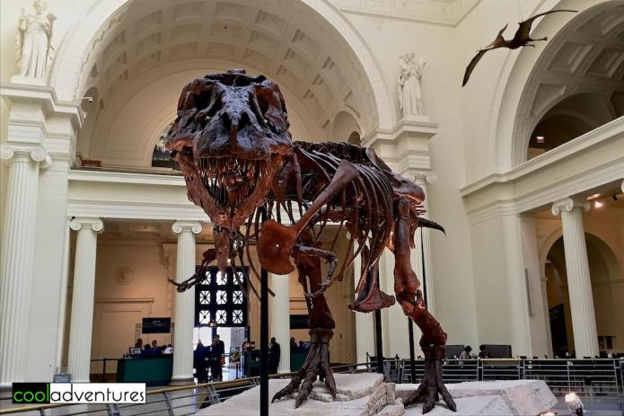 Sue the T. rex at The Field Museum, Chicago, Illinois
