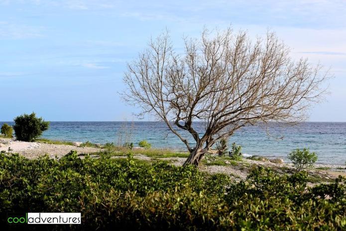 Oceanside walking paths, Santa Barbara Beach and Golf Resort, Curacao