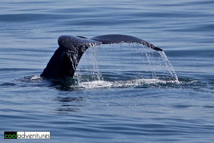 Monterey Bay, Monterey, California