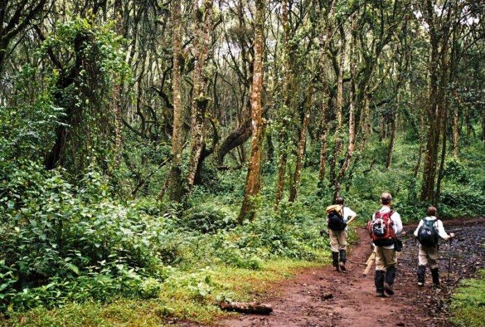 Kilimanjaro Machame Route Day 1Kilimanjaro Machame Route Day 1