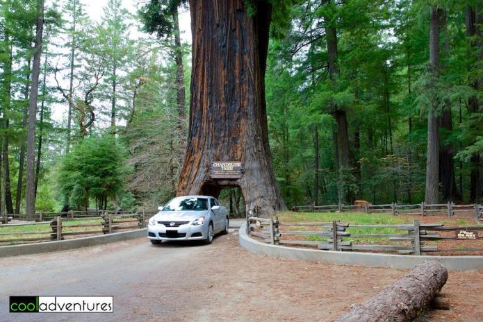 Drive thru tree park, Mendocino County