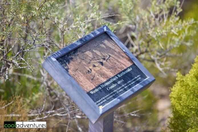 Western Diamondback Rattlesnake, Petroglyph National Monument, Albuquerque, New Mexico
