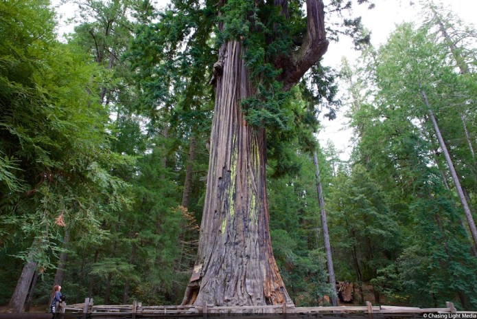 Drive Thru Tree Park in Mendocino County